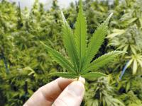 Cuanto cuesta la marihuana en el mundo